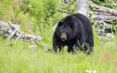 The Bear Necessities: Keeping You and Your Things Safe